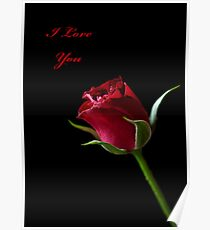 A Valentine Rose Poster