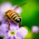Bee Bum by Kym Howard