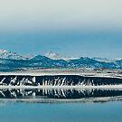 Mono Lake, California, The Salton Sea of the North by toby snelgrove  IPA