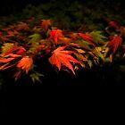 Autumn by tuliptimeimages