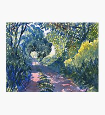 Hockney Trail Tunnel of Trees Photographic Print