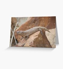 Australian Skink Greeting Card
