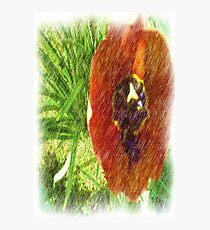 Photo drawing tulips Photographic Print