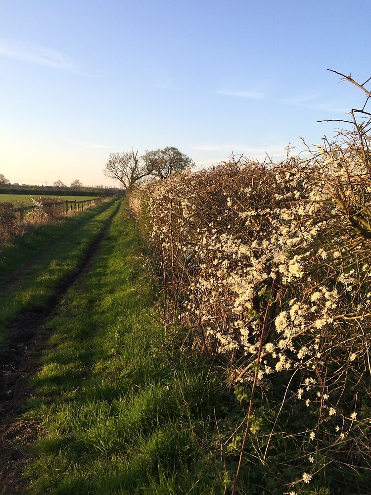Grassy Oxfordshire Lane in the Evening Sunshine by HikerDebs