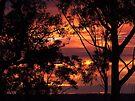 "'Dawn through the Trees"" by debsphotos"