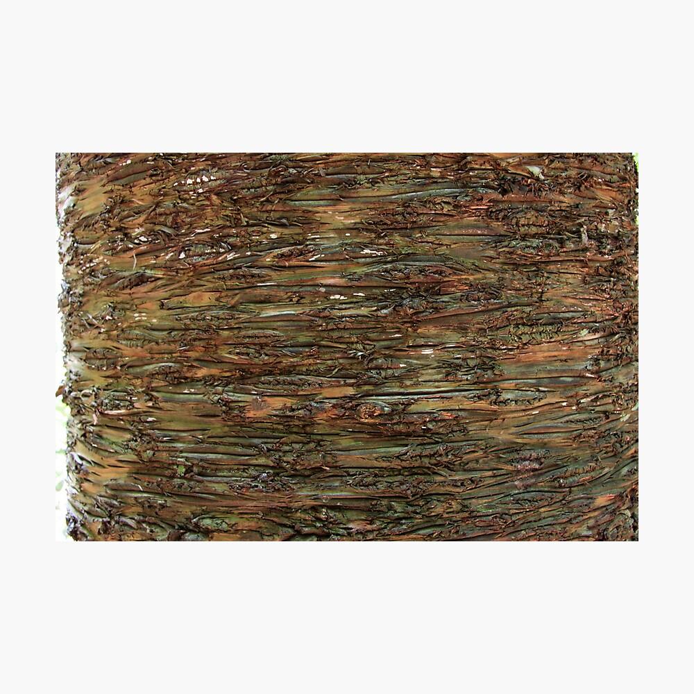 Nature's wrapper: bark. Photographic Print