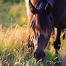 Horse grazing.Sligo. Ireland by EUNAN SWEENEY