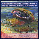 Sauvez le saumon, les trois sexes (Le saumon coho)  by Gwenn Seemel