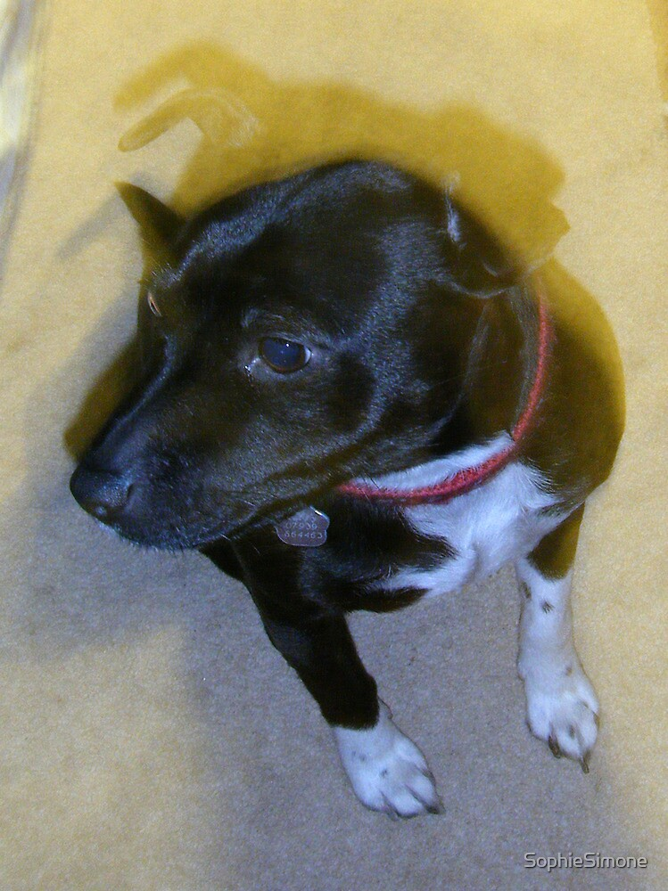 Staffie Dog by SophieSimone