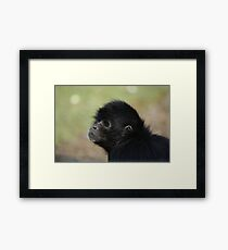 Spider Monkey Framed Print