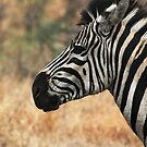 Stripes by EthaArch