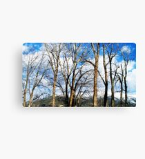 Embracing the Sky Canvas Print