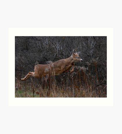 Into the Woods - White-tailed Deer Art Print