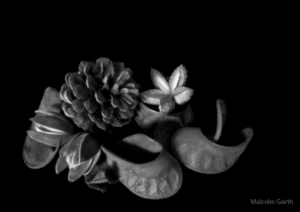 Still life - seed pods - pinhole image by Malcolm Garth