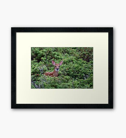 Fawn - White-tailed Deer Framed Print