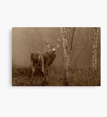 White-tailed Deer Buck in Sepia Canvas Print