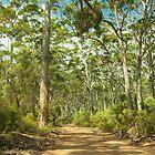 Boranup Forest # 3, Margaret River, Western Australia von Elaine Teague