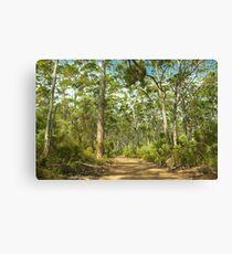Boranup Forest #3, Margaret River, Western Australia Canvas Print