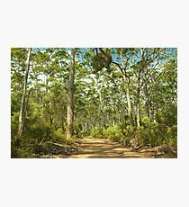 Boranup Forest #3, Margaret River, Western Australia Photographic Print