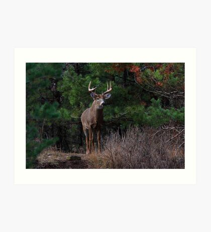 The King is Dead...Long Live the King - White-tailed Deer Art Print