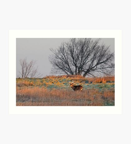 Painted Hill - White-tailed deer Art Print
