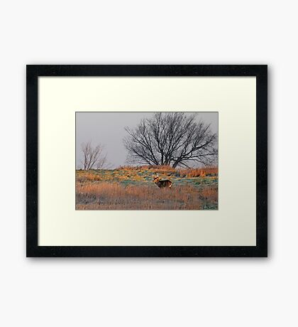 Painted Hill - White-tailed deer Framed Print