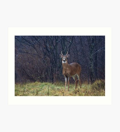 Young Buck in Snow Art Print