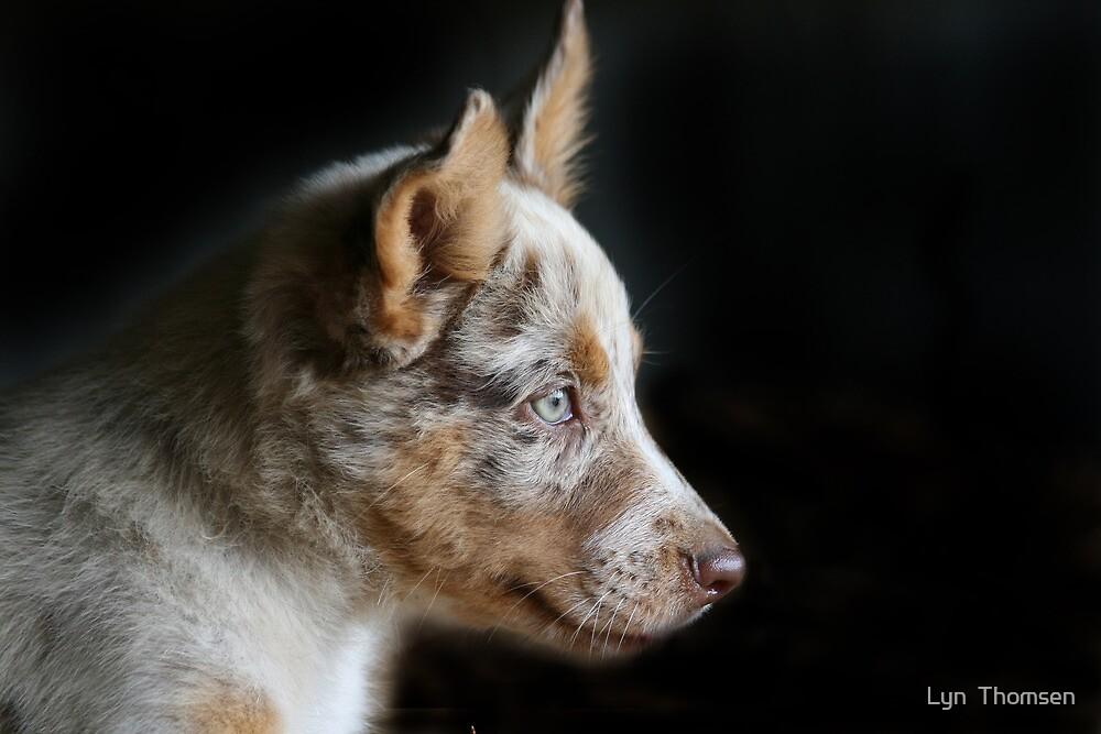 Profile Portrait of a Koolie pup. by Lyn  Thomsen