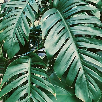 Vintage Green Palm Tree Plant by AlexandraStr