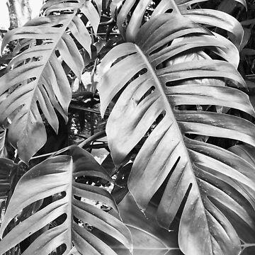 Black and White Palm Tree Plant by AlexandraStr