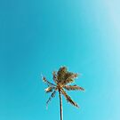 Palm Tree On a Blue Summer's Day by AlexandraStr