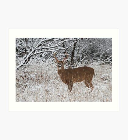 White-tailed deer buck in snow Art Print