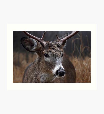 Light from Above - White-tailed deer Art Print