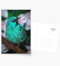 Sweet Little Bird Postcards