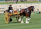 Clydesdale In Harness by Jenny Brice