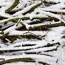 Twigs covered with snow by xophotography
