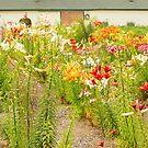 Walking the Field - Lilycrest Gardens by Marilyn Cornwell