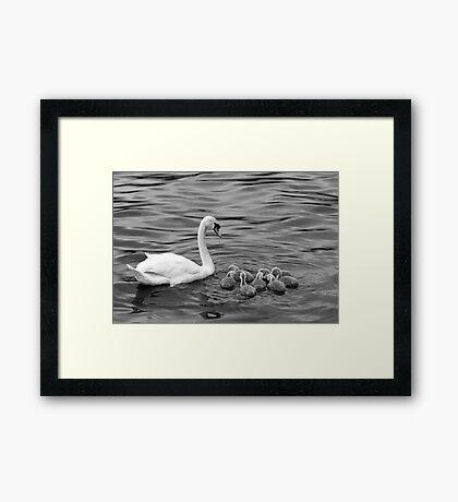 Ugly Ducklings Framed Print