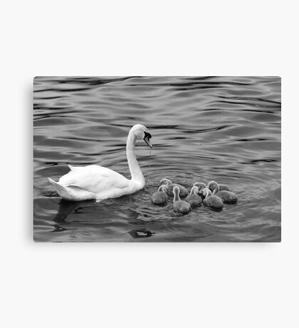 Ugly Ducklings Canvas Print