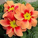 Flower of Love. by Goldenspirit
