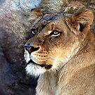 Simba by © Loree McComb