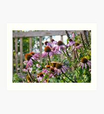 Echinacea flowers Art Print