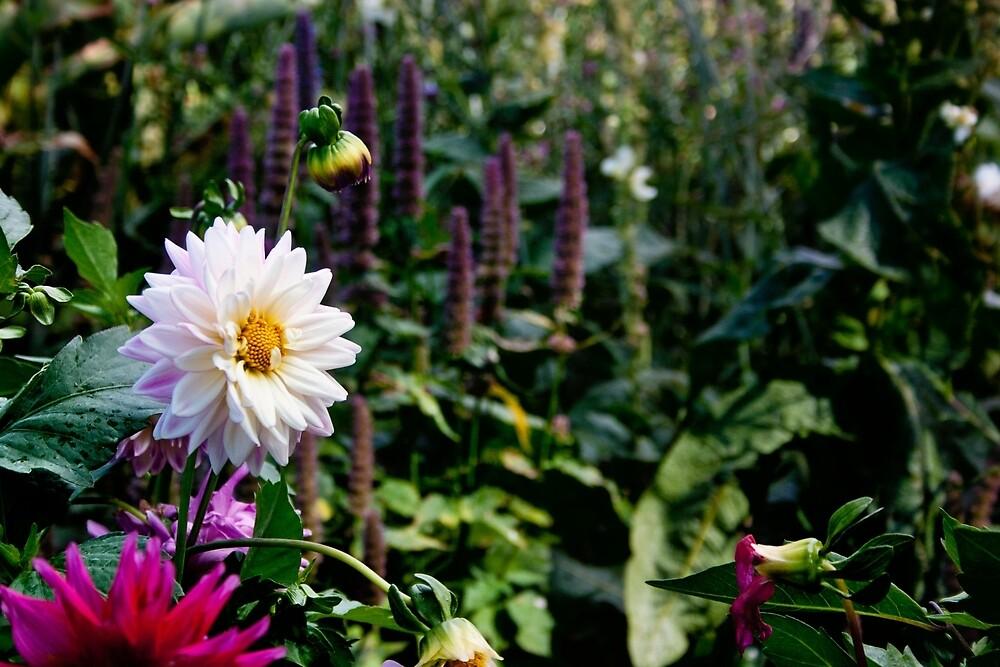 Flower Garden by Vicki Field