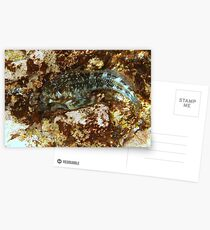Camouflage Postcards