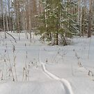 Fox tracks in  the snowy forest  by Svetlana Korneliuk