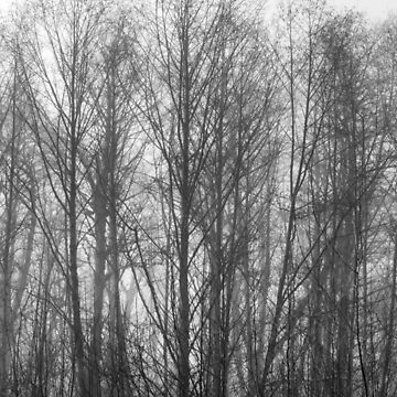 Winter Foggy Day in the Woods in Oregon by cheesim