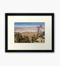 The Scraggly Tree Framed Print