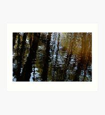 Reflection 01 - Pine Barrens, NJ Art Print
