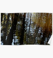 Reflection 01 - Pine Barrens, NJ Poster