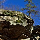 Rock Cropping & Pine Tree by Aaron Campbell
